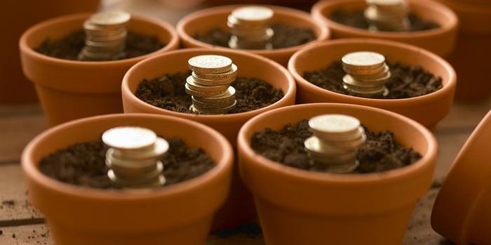 Money-in-pot-plants